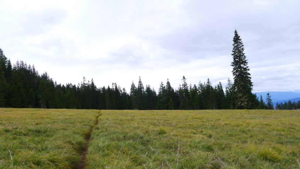 The start of the Alpine Trail